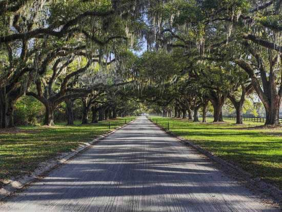 Avenue Of Oaks Boone Hall Plantation Charleston Wedding